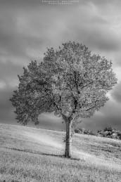 black-white-emanuele-zallocco-14