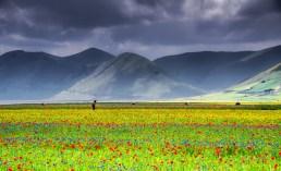 fioritura-castelluccio-di-norcia-1