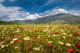 fioritura-di-castelluccio-di-norcia-sibillini-1