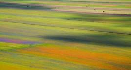 fioritura-di-castelluccio-di-norcia-sibillini-3