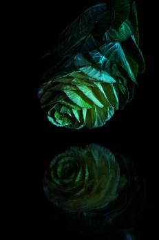 still-life-emanuele-zallocco-5